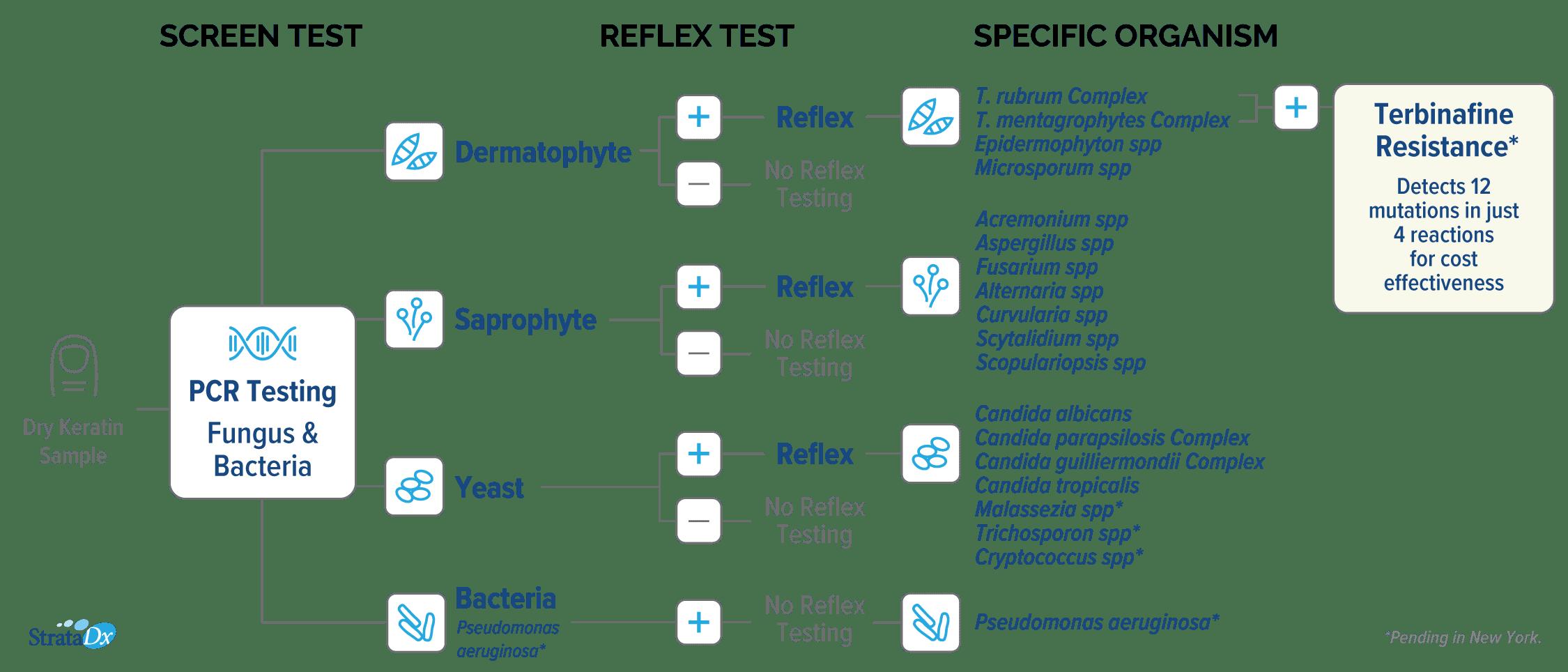 StrataDx PCR Workflow